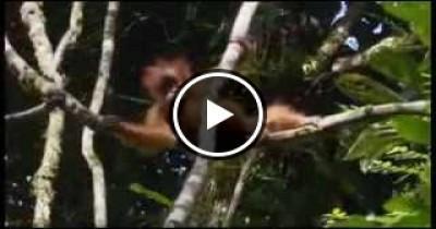 اجمل فيديو عن الحيوانات.. رائع