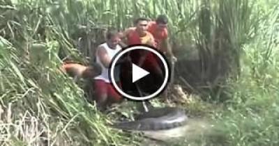 شاهد اكبر عملية صيد لثعبان اناكوندا