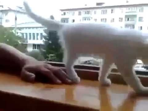سبحان الله،، قطة خائفة على صاحبها