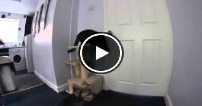 شاهد قطة ماكرة تجد طريقه لفتح الباب المغلق والهروب