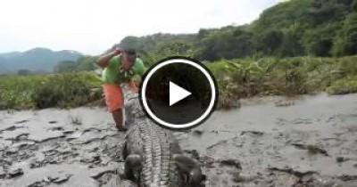 بالفيديو شاب يقوم بملاعبة تمساح ضخم