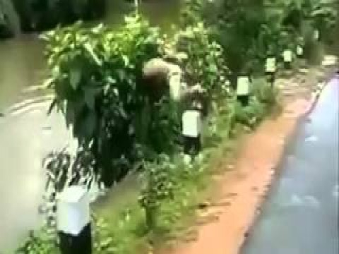حوادث حدثت نتيجة للغباء.. هتموت من الضحك