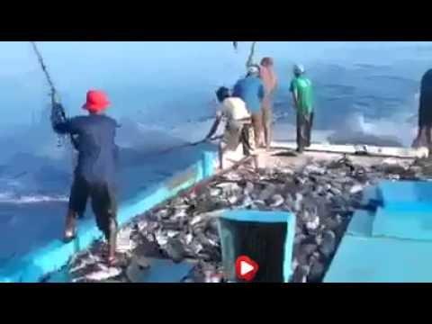 فيديو اغرب طرق صيد السمك