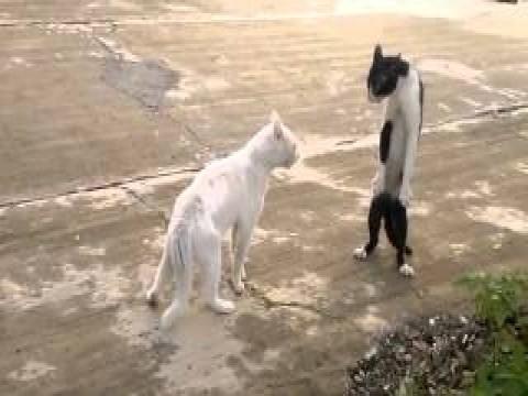 فيديو قطة تتصرف كالأفعي عندما تغضب