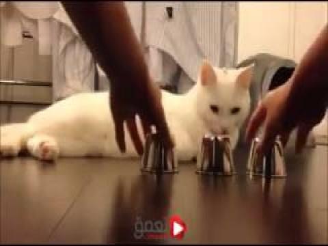 شاهد بالفيديو اذكي قطه فى العالم