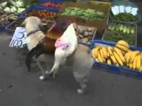 فيديو كلب يبيع الدجاج فى الصين
