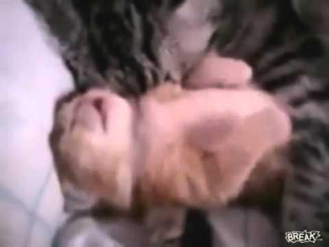 اروع فيديو ممكن تشوفه.. للأمومه فى الحيوانات