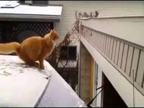 فيديو مضحك.. قطة تحاول القفز ولا تعرف