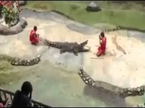 شاب يتحدي التمساح.. واعتقد انها اخر مره هيعملها