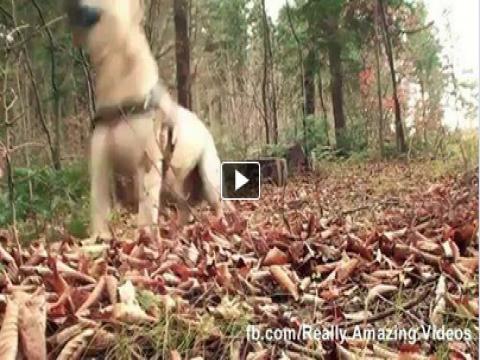 شاهد بالفيديو الكلب النينجا .. فيديو رائع