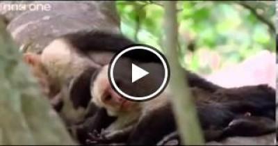 هل رايت ماذا سيحدث لو تحدثت الحيوانات؟ شاهد وستعرف