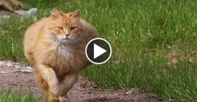سرعة القطط الجنونية