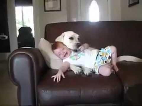 شاهد اجمد فيديو ممكن تشوفه لاطفال بتلعب مع الكلب