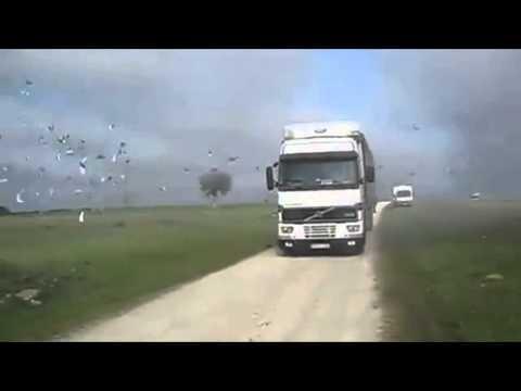 شاهد منظر رائع.. خروج مئات الطيور من الشاحنة