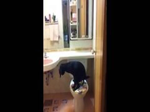 شاهد بالفيديو كلاب متربيه