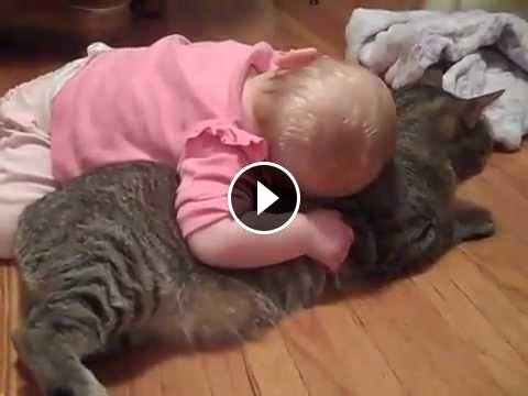 فيديو مضحك لطفل مع القطة
