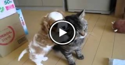 فيديو رائع لمشهد مؤثر لكلب يحتضن قطه