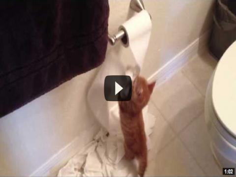 أوعي تسيب القطه فى الحمام