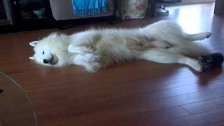 فيديو غريب لقطه بتلعب مع الكلب عادي كده