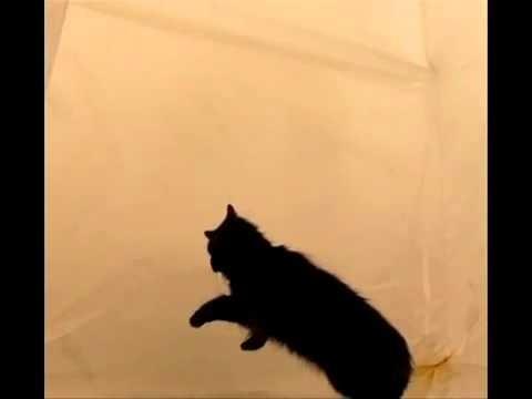 بالفيديو شاهد ماذا يحدث للقطه فى الفضاء